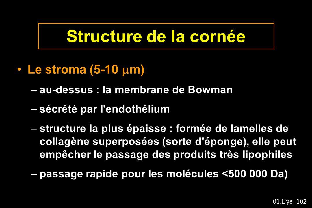 01.Eye- 102 Structure de la cornée Le stroma (5-10 m) –au-dessus : la membrane de Bowman –sécrété par l'endothélium –structure la plus épaisse : formé