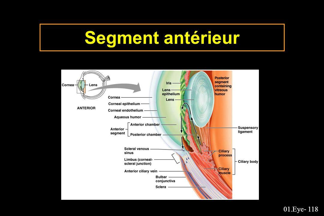 01.Eye- 118 Segment antérieur