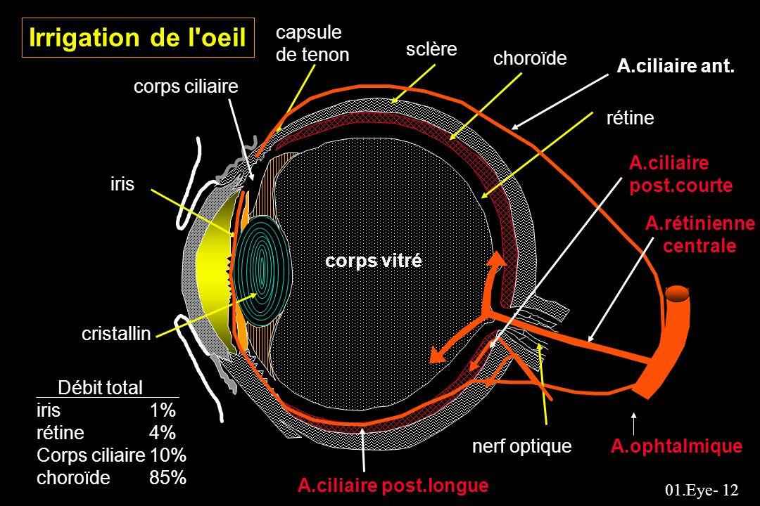 01.Eye- 12 capsule de tenon sclère choroïde A.ciliaire ant. rétine A.ciliaire post.courte A.rétinienne centrale nerf optiqueA.ophtalmique A.ciliaire p