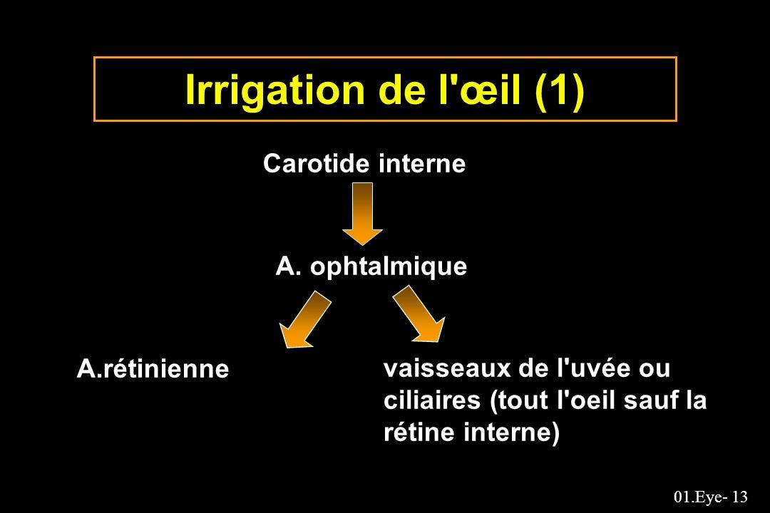 01.Eye- 13 Irrigation de l'œil (1) Carotide interne A. ophtalmique A.rétinienne vaisseaux de l'uvée ou ciliaires (tout l'oeil sauf la rétine interne)