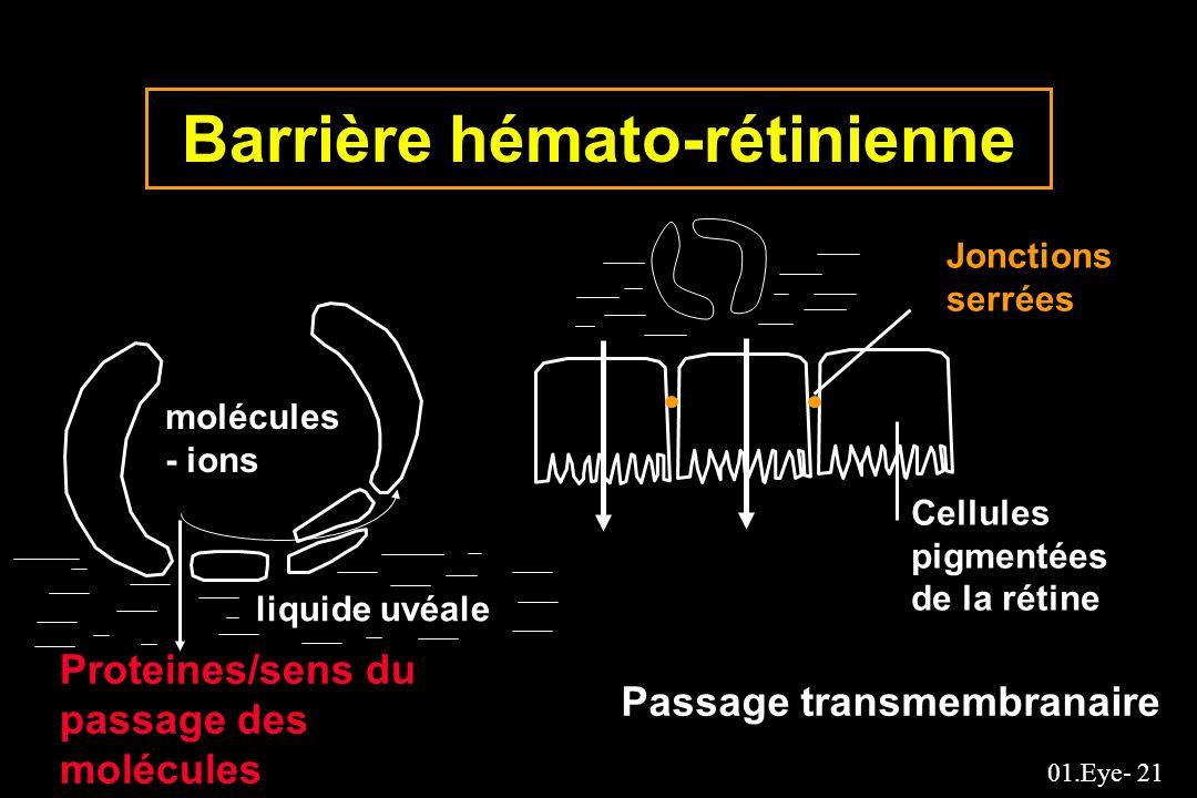 01.Eye- 21 Barrière hémato-rétinienne liquide uvéale molécules - ions Passage transmembranaire Cellules pigmentées de la rétine Jonctions serrées Prot