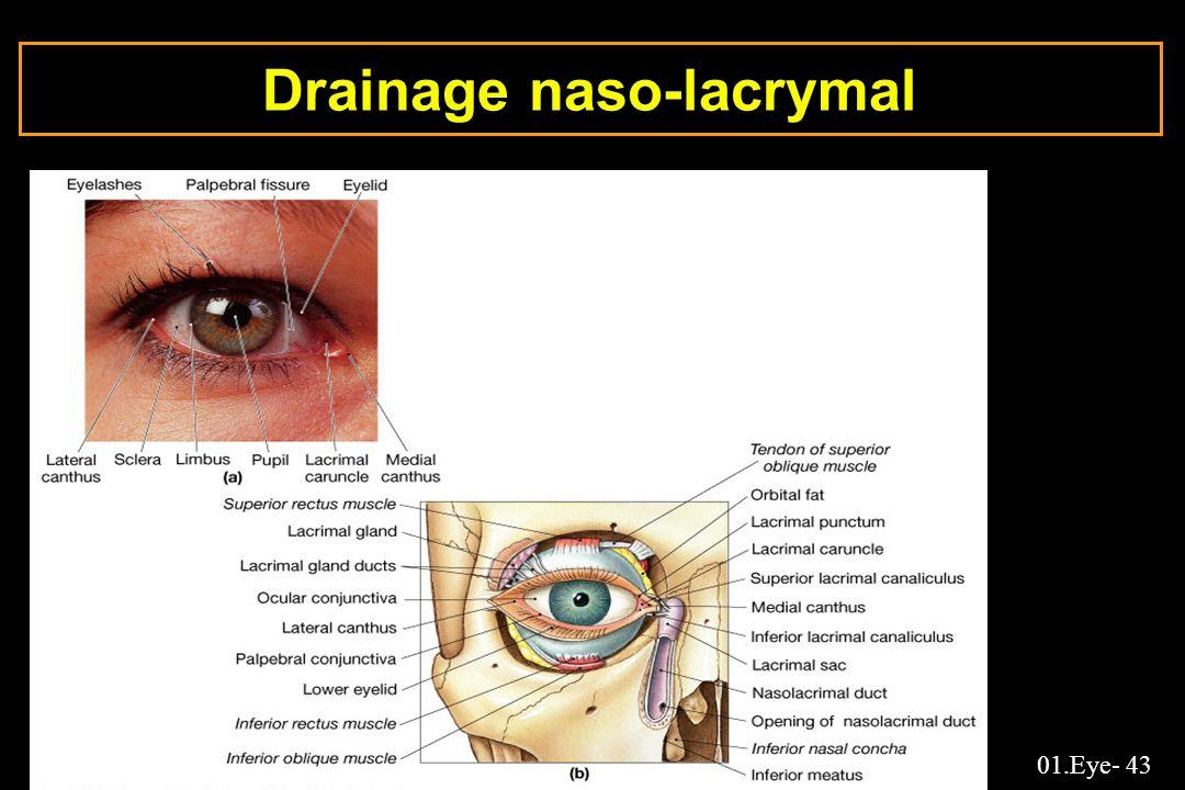 01.Eye- 43 Drainage naso-lacrymal