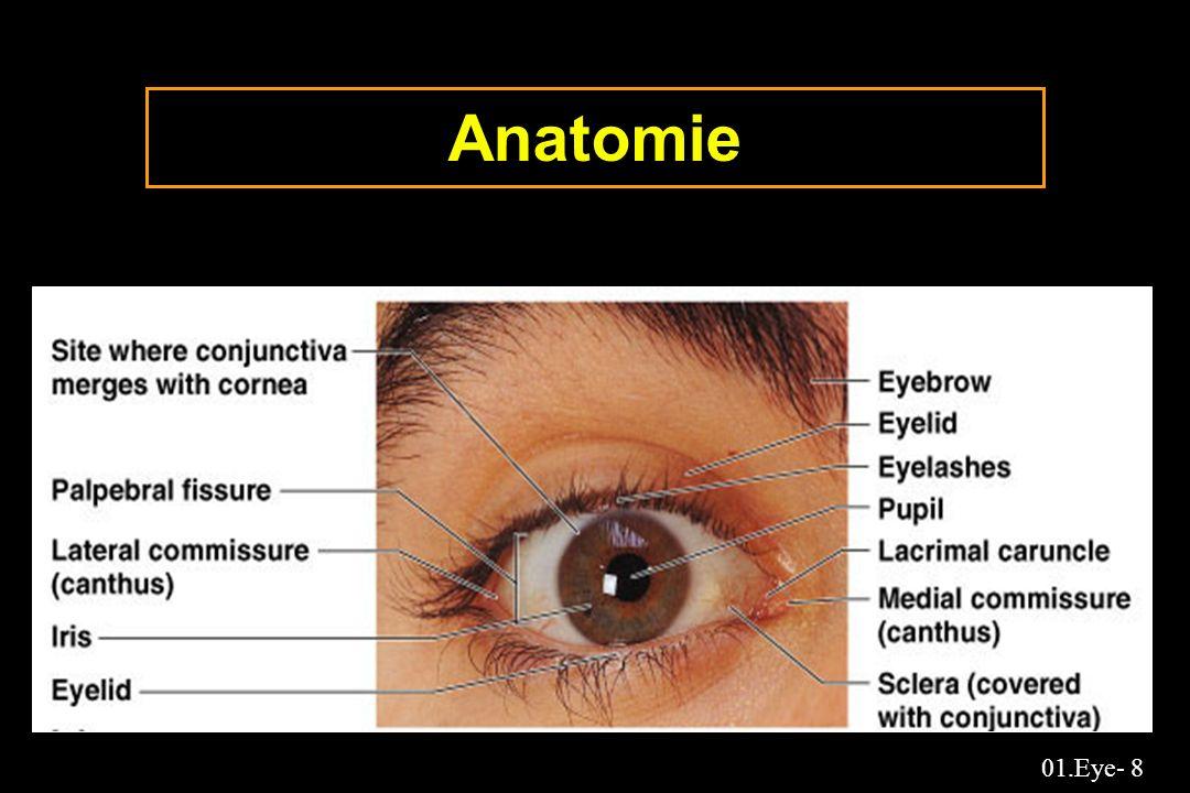 01.Eye- 89 Collyre:Devenir de la fraction non drainée f ixation aux protéines des larmes 0.6% à 1.2% (albumine, globuline...) augmentation en cas de larmoiement et d inflammation adjonction de cethylpyrimidium qui est très affine pour les protéines