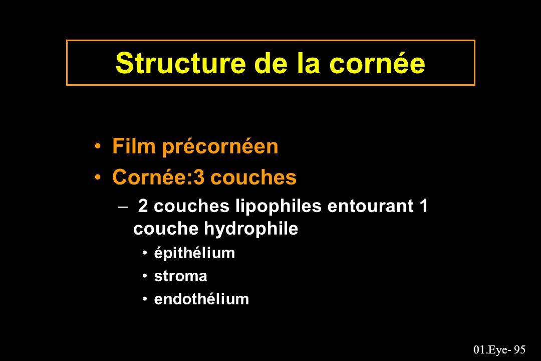01.Eye- 95 Structure de la cornée Film précornéen Cornée:3 couches – 2 couches lipophiles entourant 1 couche hydrophile épithélium stroma endothélium