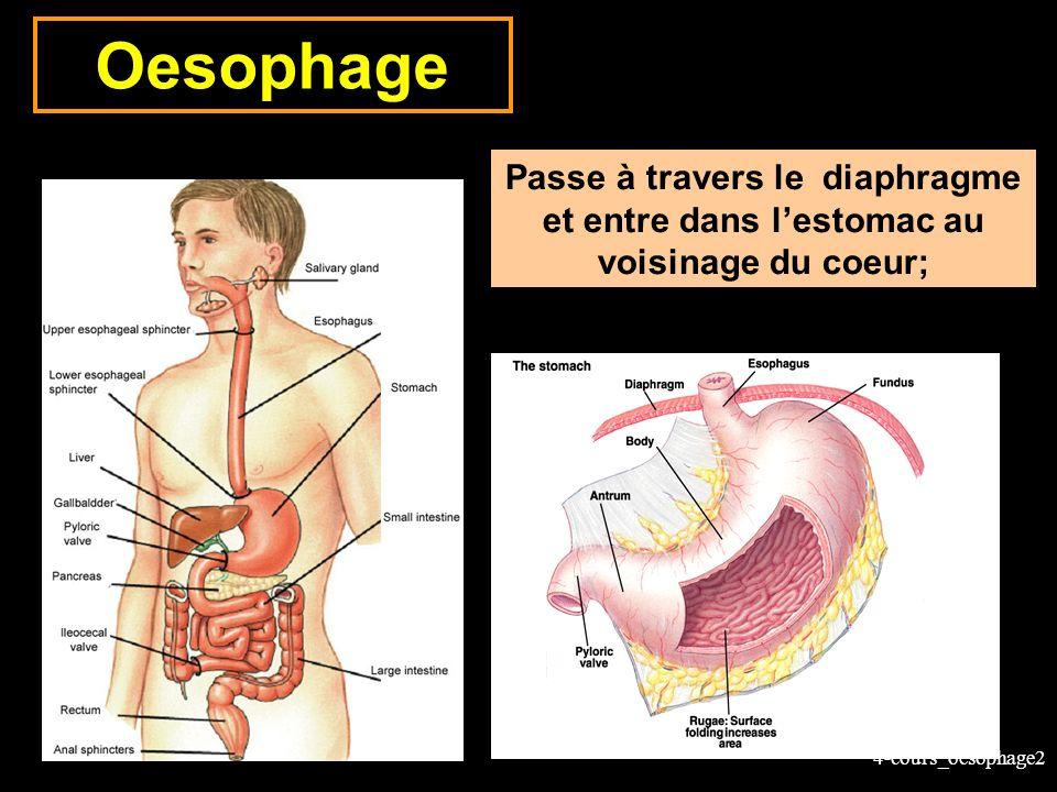 4-cours_oesophage3 Loesophage: anatomie Tube musculaire Localisation: du pharynx à lestomac Derrière la trachée Devant la colonne vertébrale