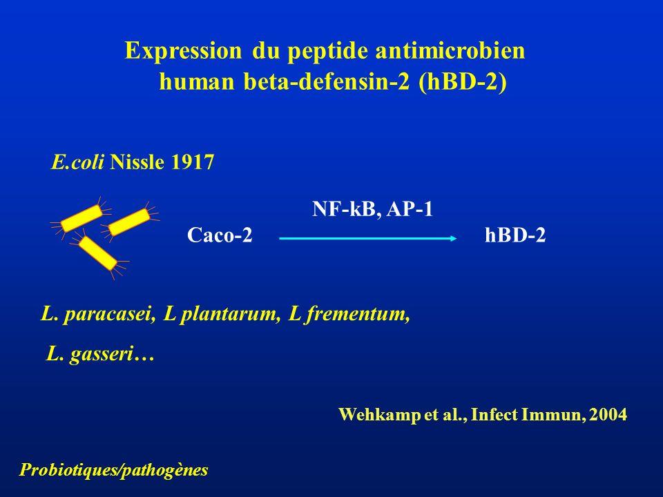 Expression du peptide antimicrobien human beta-defensin-2 (hBD-2) Caco-2hBD-2 NF-kB, AP-1 E.coli Nissle 1917 L. paracasei, L plantarum, L frementum, L