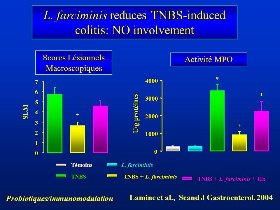 Scores Lésionnels Macroscopiques Activité MPO 0 1 2 3 4 5 67 SLM + TNBS TNBS + L. farciminis TNBS + L. farciminis + Hb L. farciminis Témoins 0 1000 20