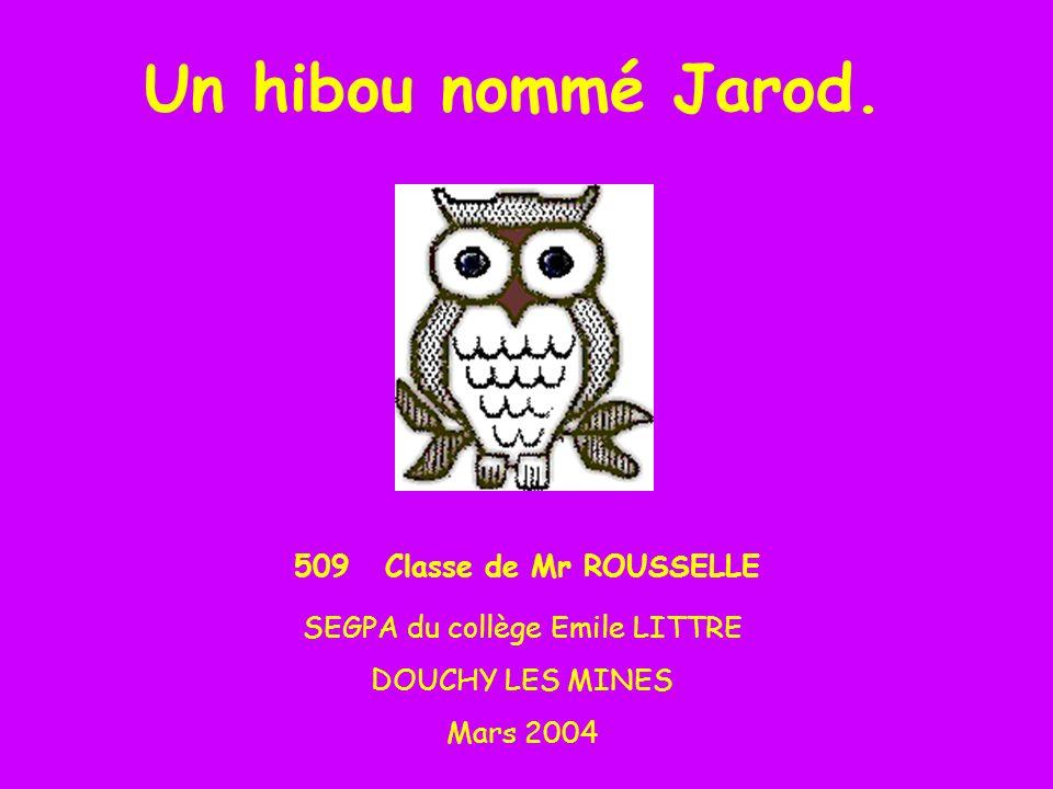 Un hibou nommé Jarod.