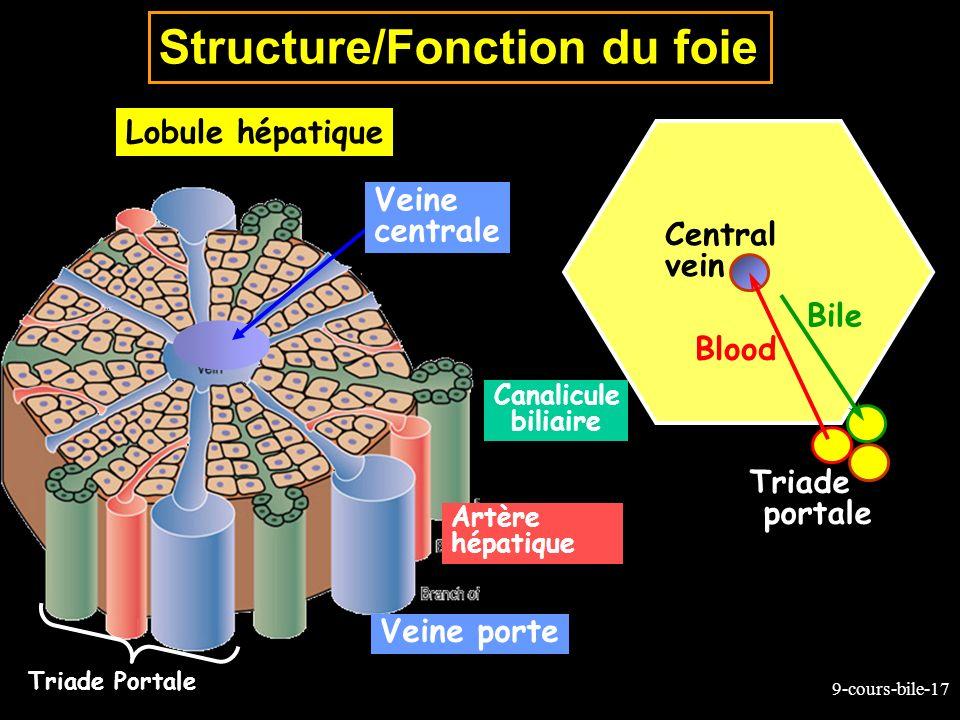 9-cours-bile-17 Structure/Fonction du foie Lobule hépatique Triade Portale Canalicule biliaire Artère hépatique Veine porte Veine centrale Central vei