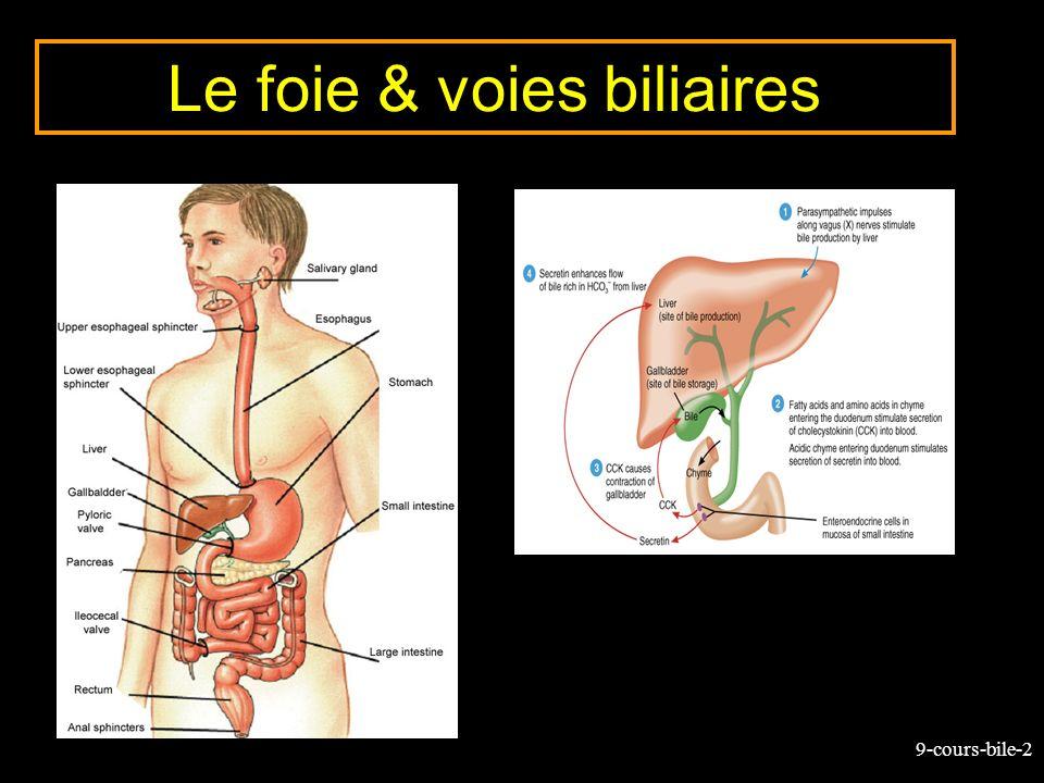 9-cours-bile-43 Composition de la bile (%) Eau97.592 Sels biliaires 1.16 Bilirubine0.04 0.3 Cholestérol0.10.3 - 0.9 Lécithine 0.040.3 Bile hépatique Bile vésiculaire