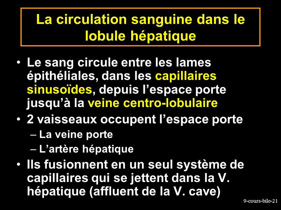 9-cours-bile-21 La circulation sanguine dans le lobule hépatique Le sang circule entre les lames épithéliales, dans les capillaires sinusoïdes, depuis