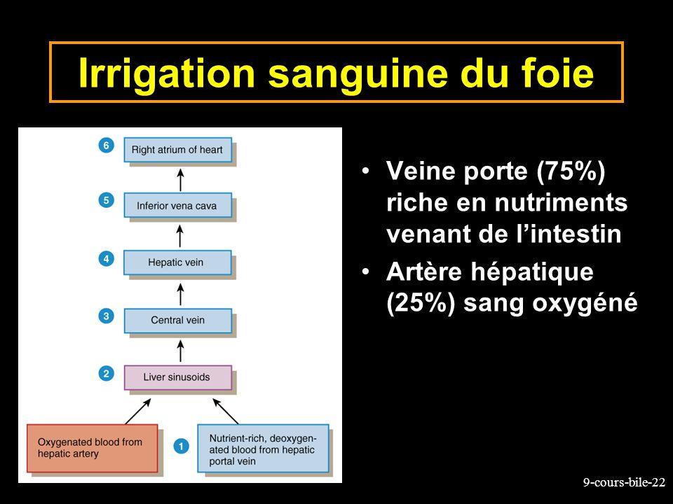 9-cours-bile-22 Irrigation sanguine du foie Veine porte (75%) riche en nutriments venant de lintestin Artère hépatique (25%) sang oxygéné