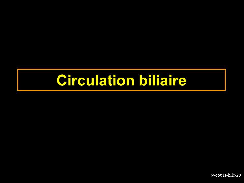 9-cours-bile-23 Circulation biliaire