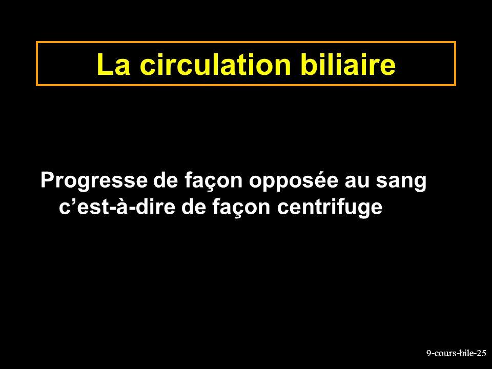 9-cours-bile-25 La circulation biliaire Progresse de façon opposée au sang cest-à-dire de façon centrifuge