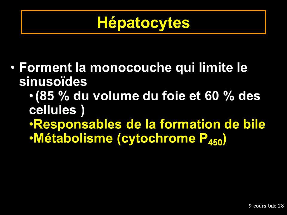9-cours-bile-28 Forment la monocouche qui limite le sinusoïdes (85 % du volume du foie et 60 % des cellules ) Responsables de la formation de bile Mét