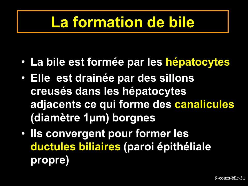 9-cours-bile-31 La formation de bile La bile est formée par les hépatocytes Elle est drainée par des sillons creusés dans les hépatocytes adjacents ce