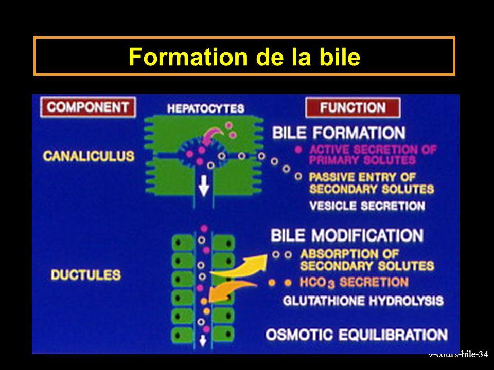 9-cours-bile-34 Formation de la bile