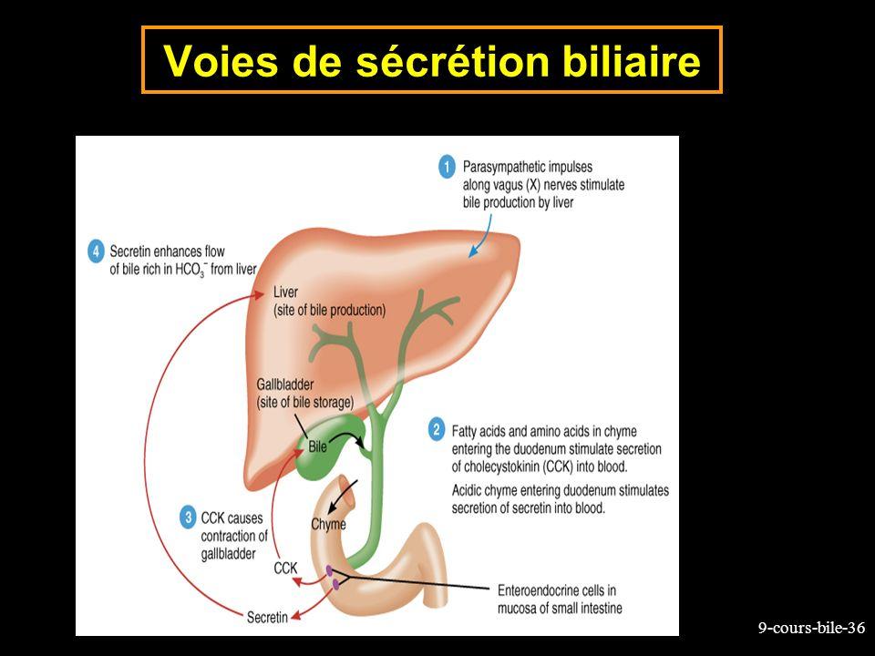 9-cours-bile-36 Voies de sécrétion biliaire