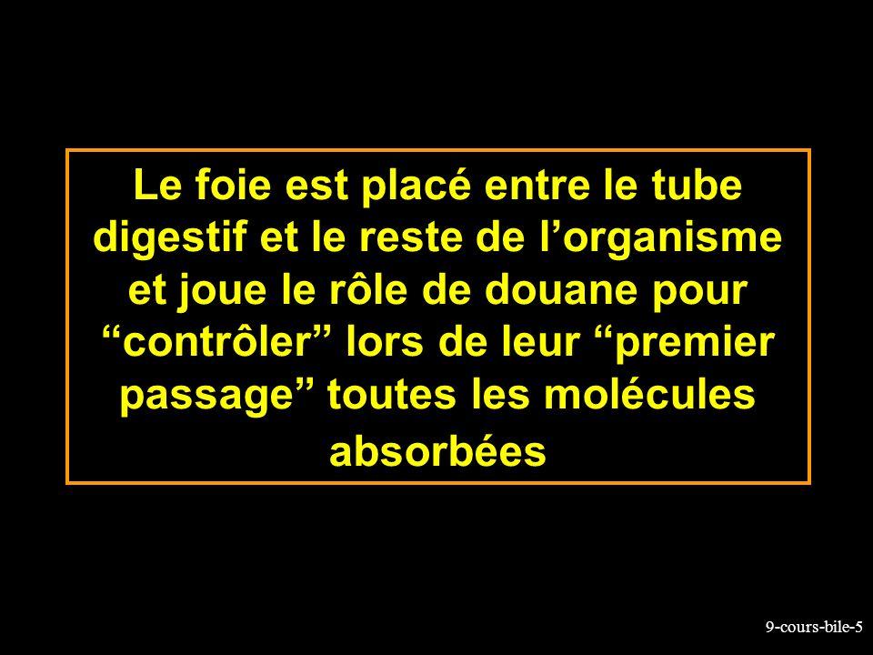 9-cours-bile-5 Le foie est placé entre le tube digestif et le reste de lorganisme et joue le rôle de douane pour contrôler lors de leur premier passag