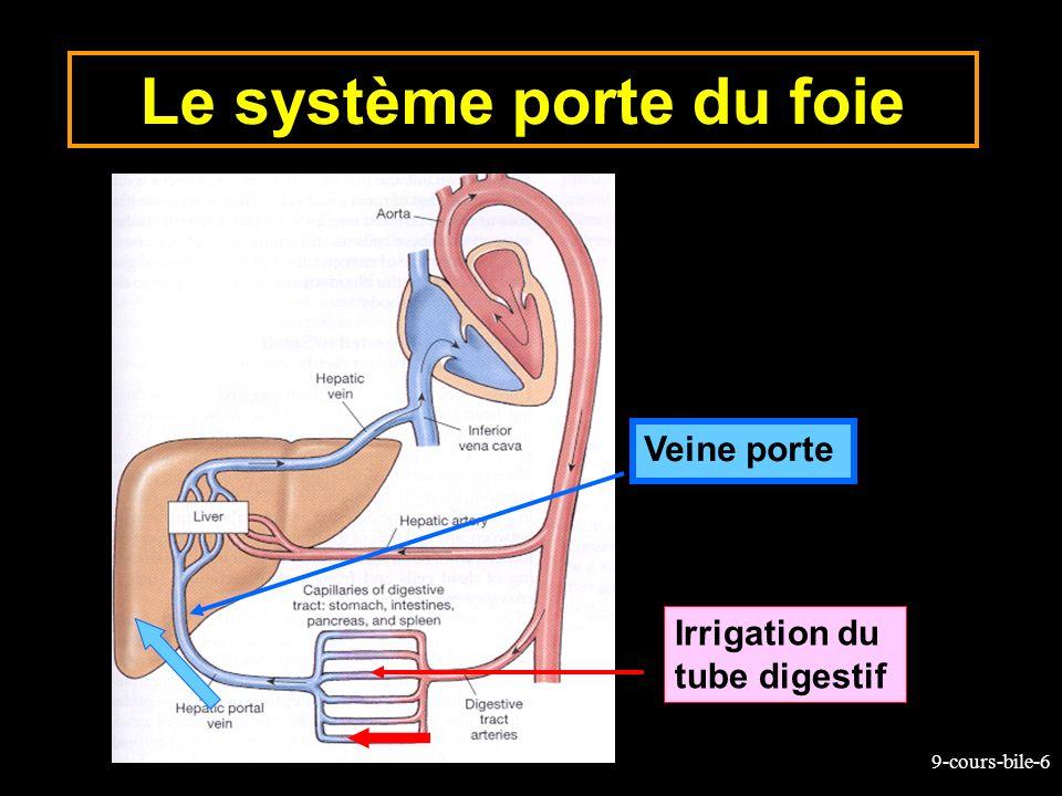 9-cours-bile-17 Structure/Fonction du foie Lobule hépatique Triade Portale Canalicule biliaire Artère hépatique Veine porte Veine centrale Central vein Triade portale Blood Bile