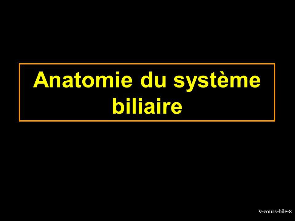 9-cours-bile-49 Bilirubine circulante (2) Une accumulation plasmatique de bilirubine conduit à lictère La bilirubine non conjuguée est lipophile La fraction libre de toute fixation à lalbumine (normalement très faible) peut passer dans le SNC ou elle est toxique (noyau gris du cerveau)