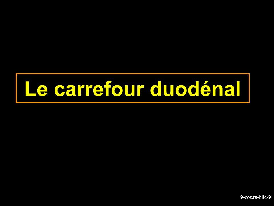 9-cours-bile-50 Bilirubine: clairance hépatique La captation hépatocytaire de la bilrubine non conjuguée a lieu au pôle sinusal par un mécanisme actif La bilirubine captée est liée à des protéines accepteuses (ligandines) Les ligandines sont en faibles concentrations à la naissance et cest lune des causes (avec un défaut de glucuronoconjugaison) de lictère du nouveau-né