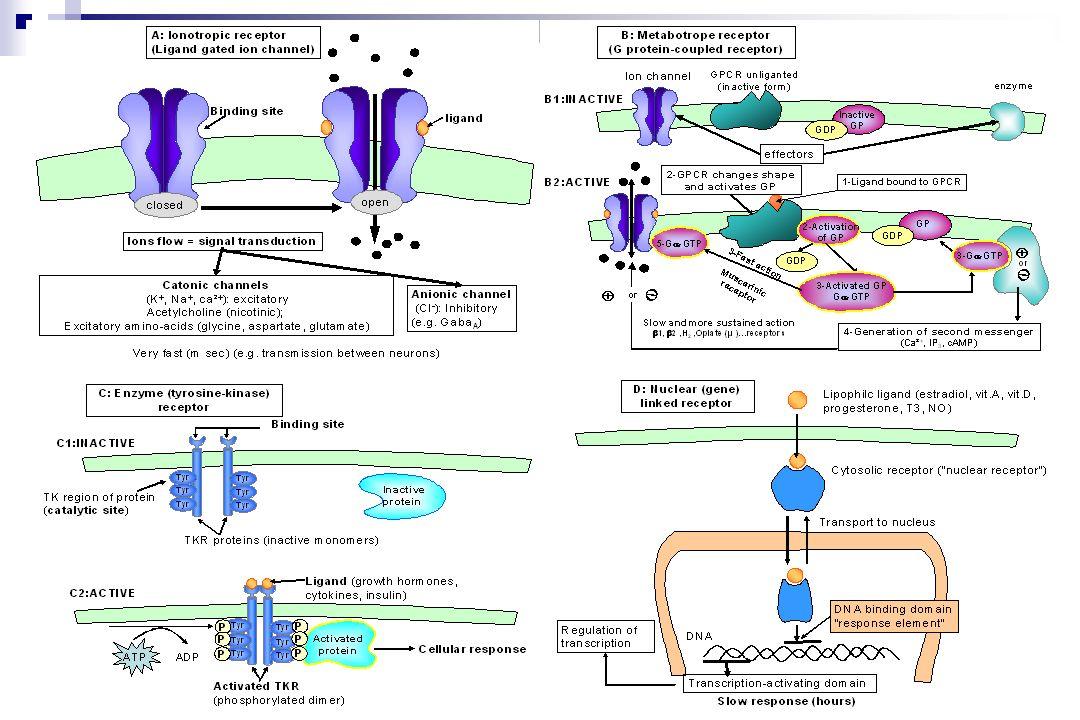 Modèles caténaires 123 PLASMA eau extracellulaire CELLULE eau intracellulaire Espaces hydriques Bases physiologiques des modèles compartimentaux 28