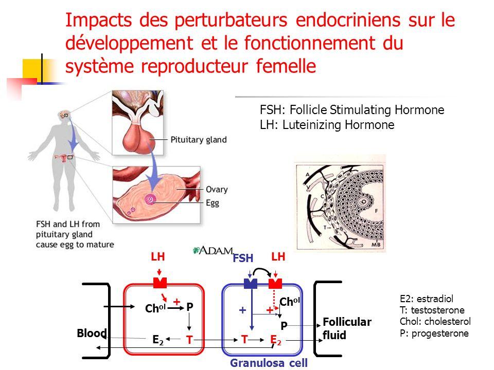 Impacts des perturbateurs endocriniens sur le développement et le fonctionnement du système reproducteur femelle FSH: Follicle Stimulating Hormone LH: