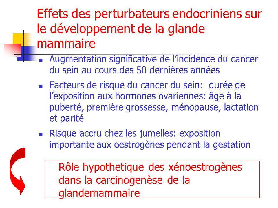 Effets des perturbateurs endocriniens sur le développement de la glande mammaire Augmentation significative de lincidence du cancer du sein au cours d