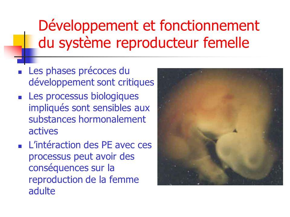 Développement et fonctionnement du système reproducteur femelle Les phases précoces du développement sont critiques Les processus biologiques impliqué