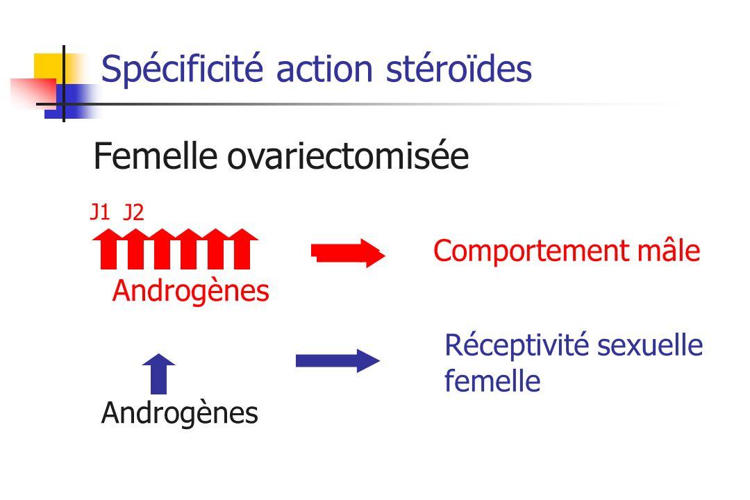 Spécificité action stéroïdes Androgènes Femelle ovariectomisée Comportement mâle Androgènes Réceptivité sexuelle femelle J1 J2