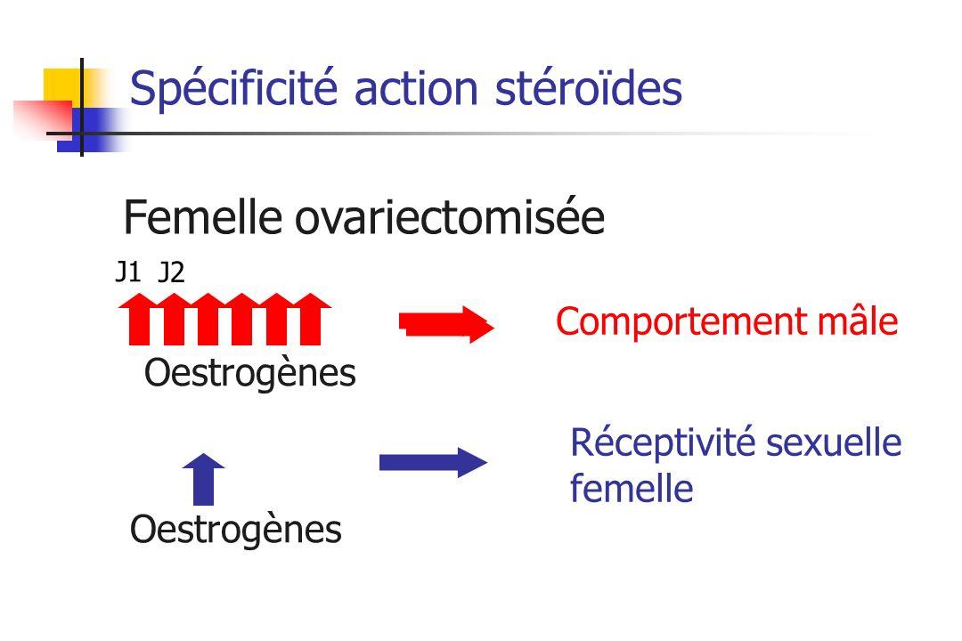 Spécificité action stéroïdes Oestrogènes Femelle ovariectomisée Oestrogènes J1 J2 Comportement mâle Réceptivité sexuelle femelle