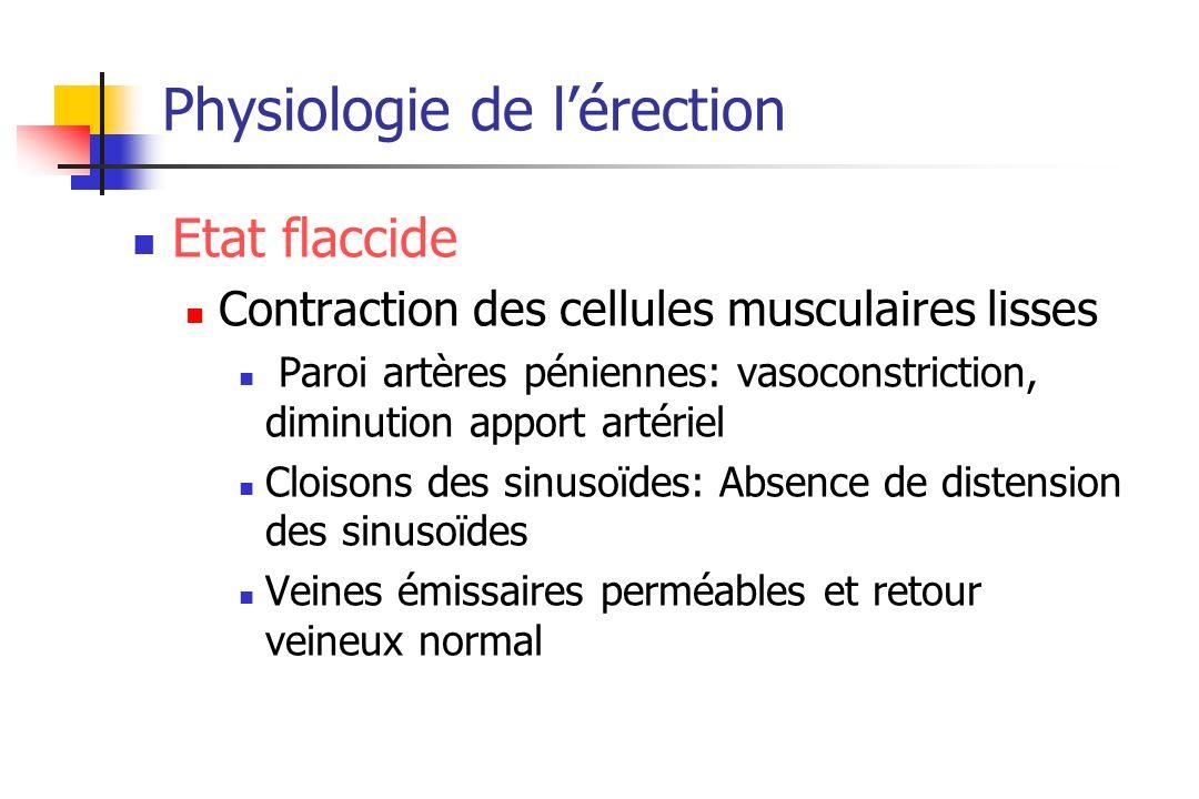 Physiologie de lérection Etat flaccide Contraction des cellules musculaires lisses Paroi artères péniennes: vasoconstriction, diminution apport artéri
