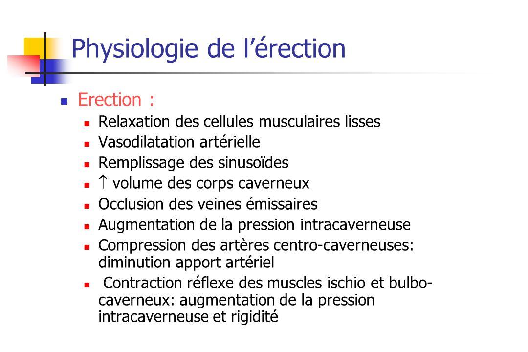 Physiologie de lérection Erection : Relaxation des cellules musculaires lisses Vasodilatation artérielle Remplissage des sinusoïdes volume des corps c