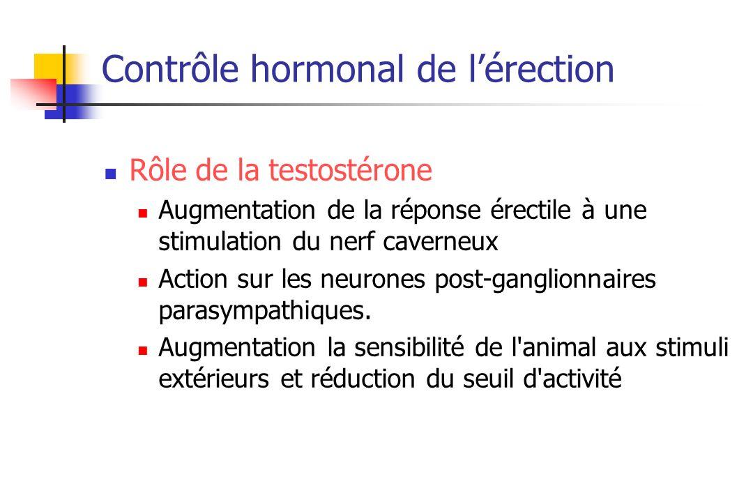 Contrôle hormonal de lérection Rôle de la testostérone Augmentation de la réponse érectile à une stimulation du nerf caverneux Action sur les neurones