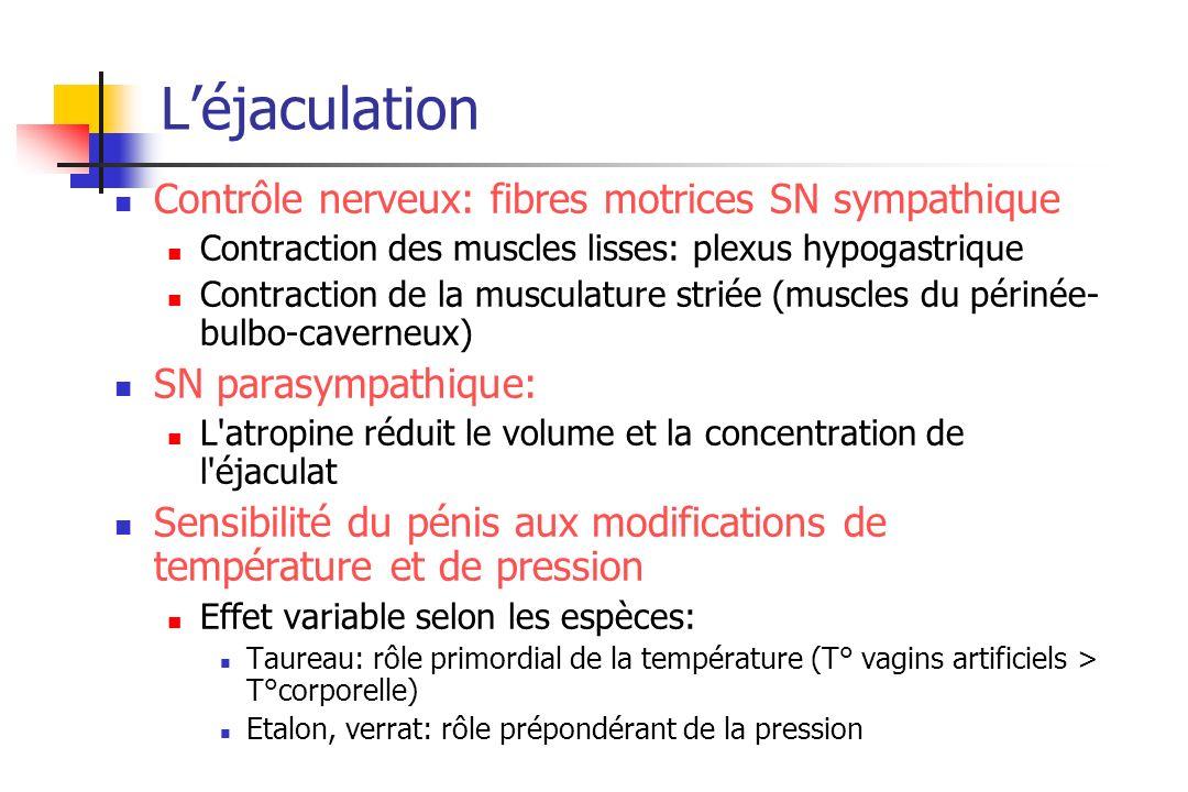 Léjaculation Contrôle nerveux: fibres motrices SN sympathique Contraction des muscles lisses: plexus hypogastrique Contraction de la musculature strié