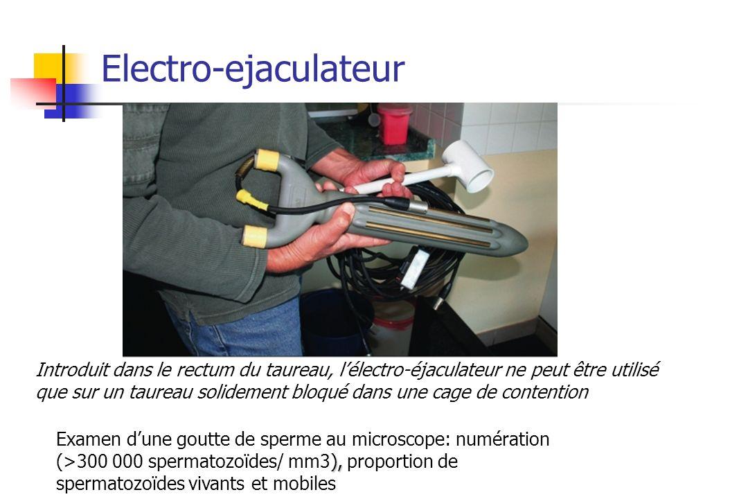 Electro-ejaculateur Introduit dans le rectum du taureau, lélectro-éjaculateur ne peut être utilisé que sur un taureau solidement bloqué dans une cage