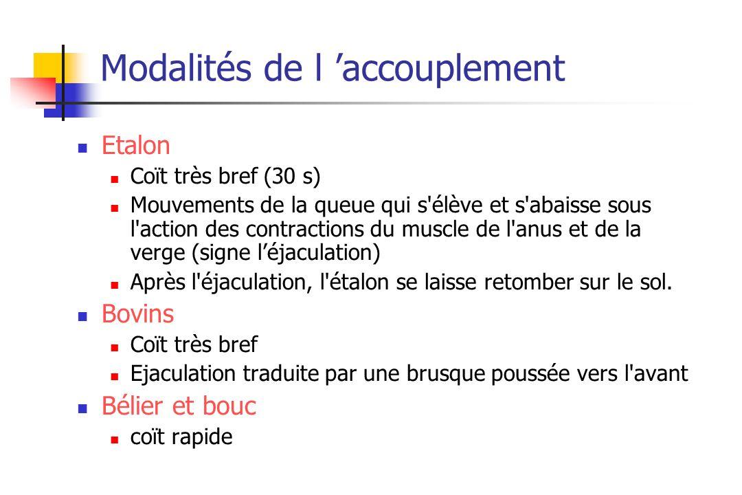Modalités de l accouplement Etalon Coït très bref (30 s) Mouvements de la queue qui s'élève et s'abaisse sous l'action des contractions du muscle de l