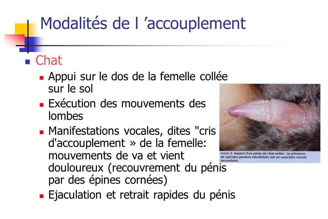 Modalités de l accouplement Chat Appui sur le dos de la femelle collée sur le sol Exécution des mouvements des lombes Manifestations vocales, dites