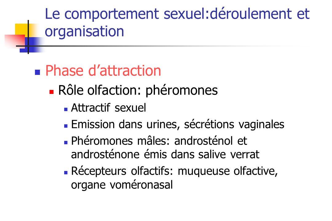 Le comportement sexuel:déroulement et organisation Phase dattraction Rôle olfaction: phéromones Attractif sexuel Emission dans urines, sécrétions vagi