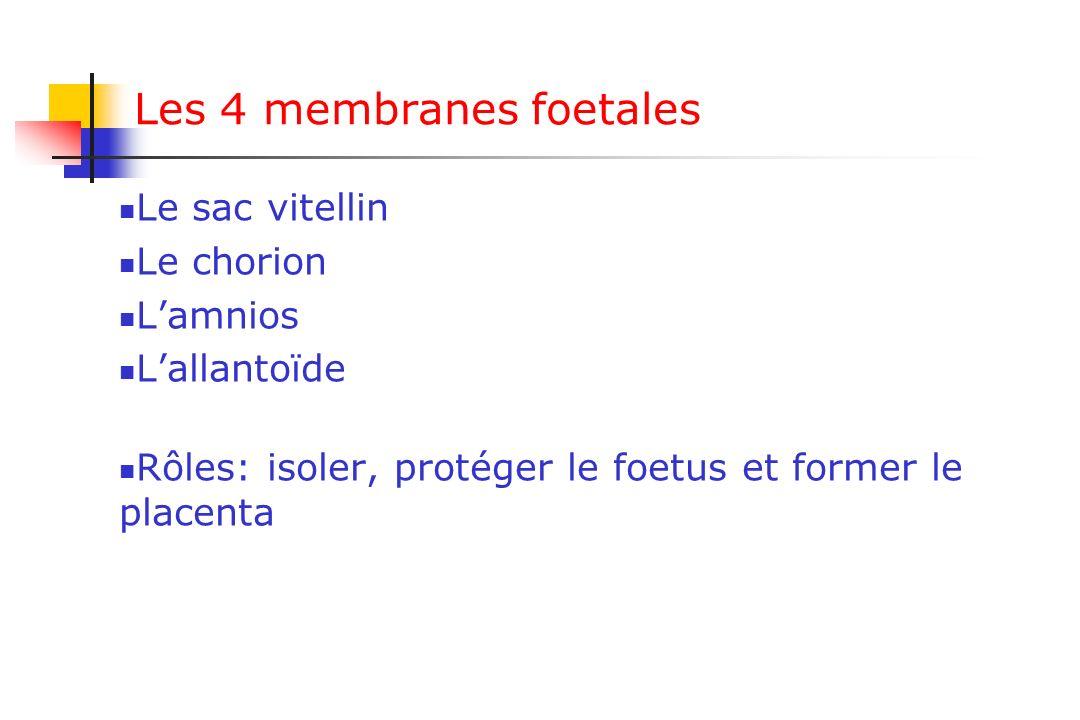 Les 4 membranes foetales Le sac vitellin Le chorion Lamnios Lallantoïde Rôles: isoler, protéger le foetus et former le placenta