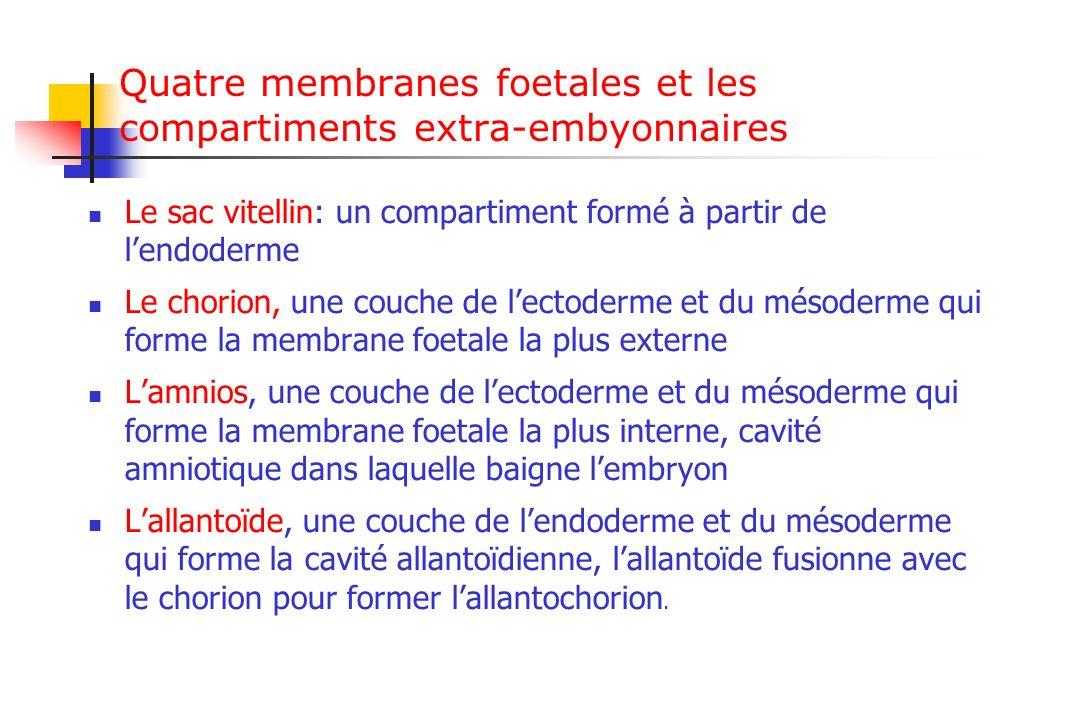 Quatre membranes foetales et les compartiments extra-embyonnaires Le sac vitellin: un compartiment formé à partir de lendoderme Le chorion, une couche