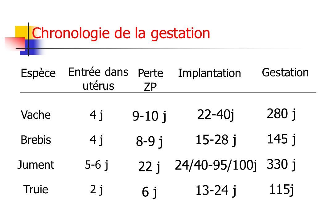Chronologie de la gestation Espèce Entrée dans utérus Perte ZP Implantation Vache Brebis Jument Truie 4 j 5-6 j 2 j 9-10 j 8-9 j 22 j 6 j 22-40j 15-28