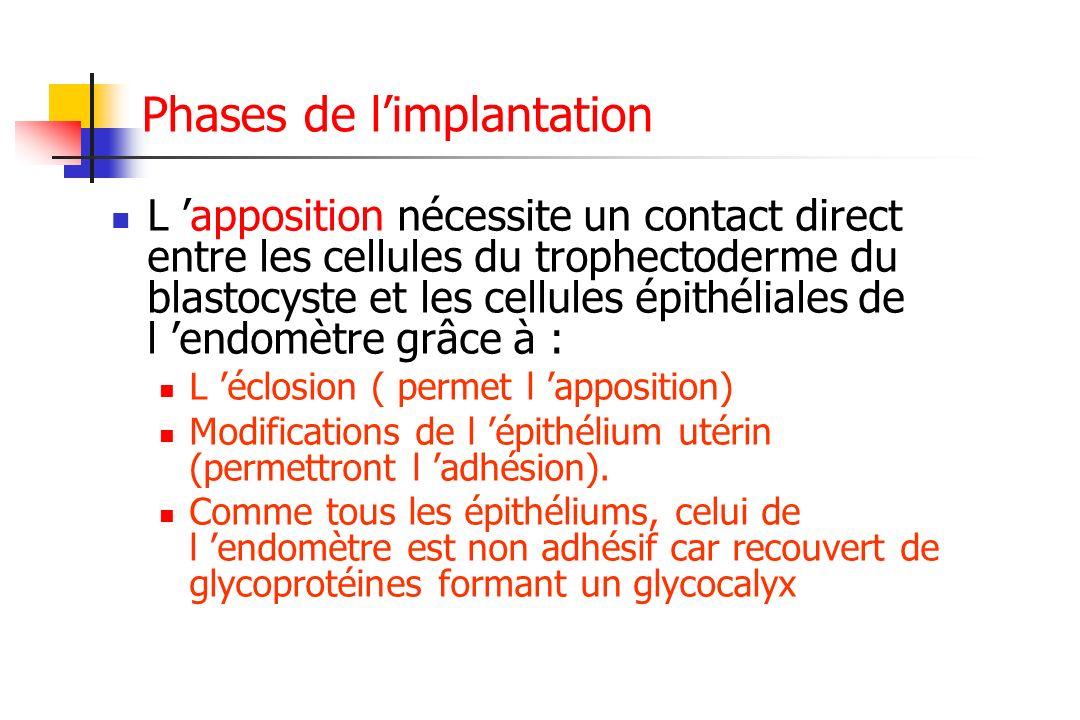 Phases de limplantation L apposition nécessite un contact direct entre les cellules du trophectoderme du blastocyste et les cellules épithéliales de l