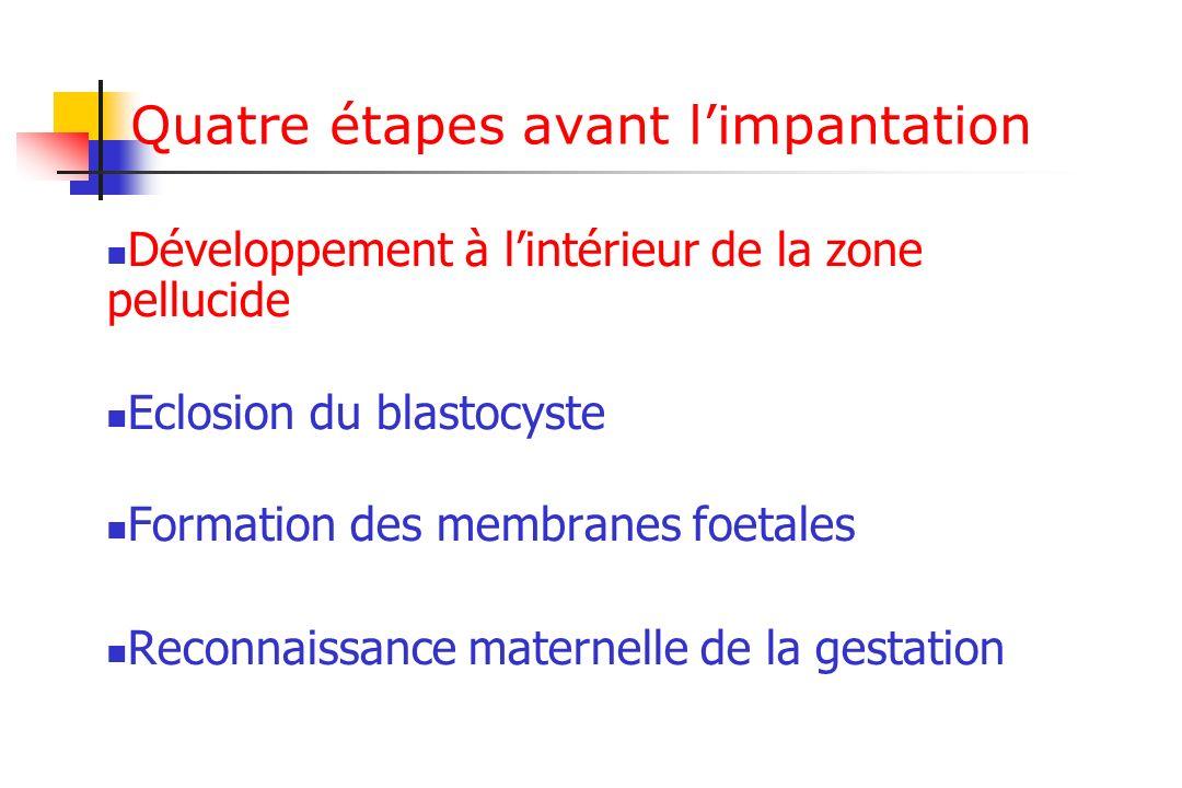 Quatre étapes avant limpantation Développement à lintérieur de la zone pellucide Eclosion du blastocyste Formation des membranes foetales Reconnaissance maternelle de la gestation