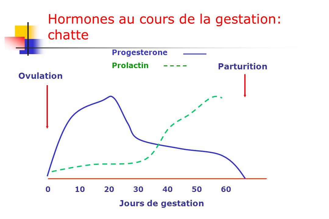 Hormones au cours de la gestation: chatte 0102030405060 Progesterone Prolactin Jours de gestation Ovulation Parturition