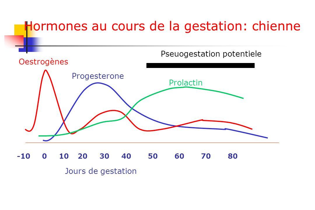 Hormones au cours de la gestation: chienne -10 0 10 20 30 40 50 60 70 80 Oestrogènes Progesterone Prolactin Jours de gestation Pseuogestation potentie