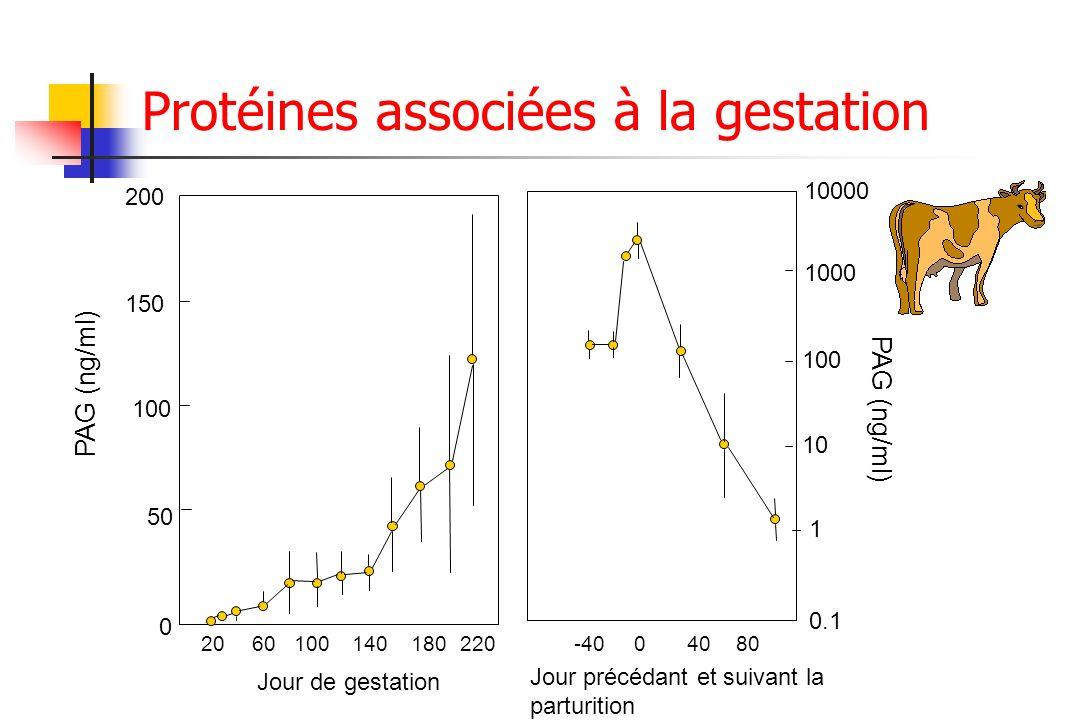 Protéines associées à la gestation 50 100 150 200 0 2060100140180220 Jour de gestation PAG (ng/ml) Jour précédant et suivant la parturition -4004080 0