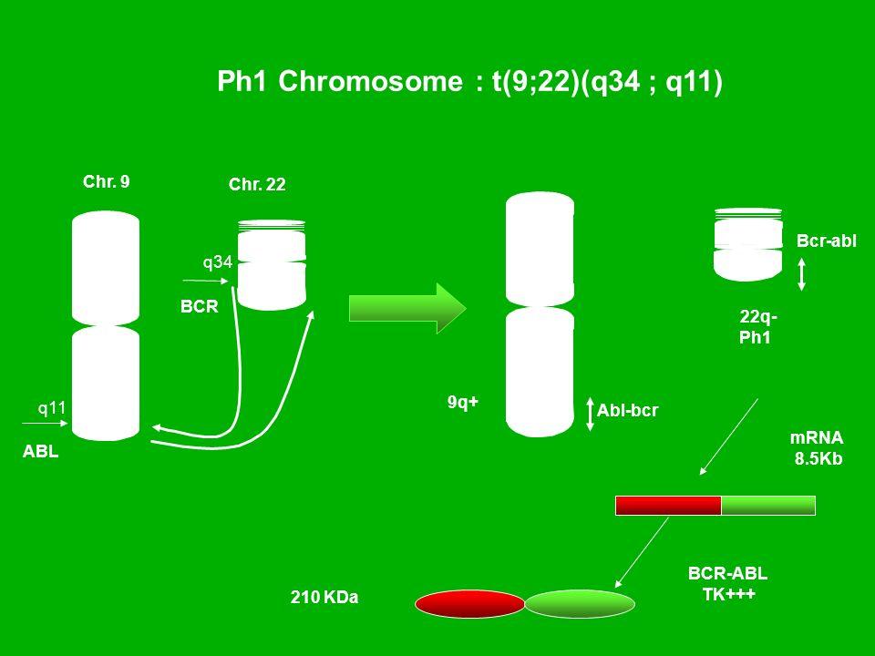 Ph1 Chromosome : t(9;22)(q34 ; q11) 22q- Ph1 Chr. 9 q34 q11 BCR ABL Bcr-abl Chr. 22 9q+ Abl-bcr mRNA 8.5Kb BCR-ABL TK+++ 210 KDa