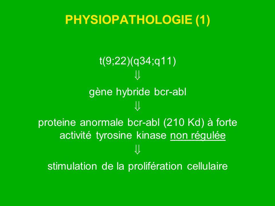 PHYSIOPATHOLOGIE (1) t(9;22)(q34;q11) gène hybride bcr-abl proteine anormale bcr-abl (210 Kd) à forte activité tyrosine kinase non régulée stimulation